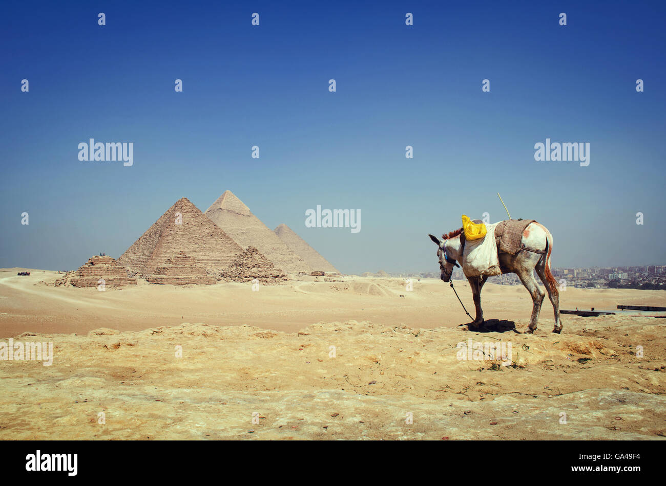 A white weak donkey in the desert by a panoramic view of the pyramids - Stock Image