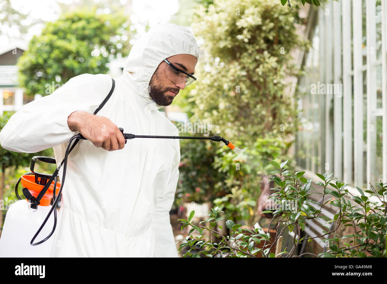 Male scientist spraying pesticides on plants Stock Photo