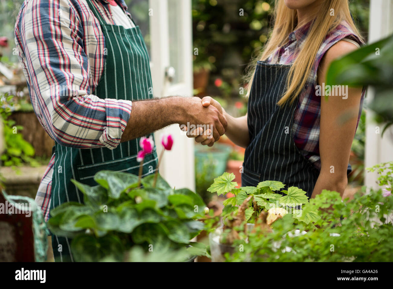 Midsection of colleagues shaking hands at greenhouse - Stock Image