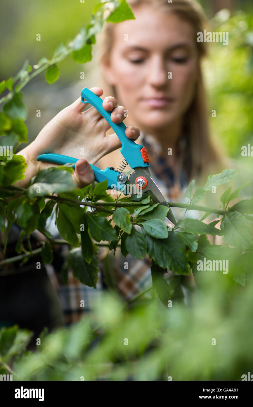 Gardener pruning plants with shears - Stock Image