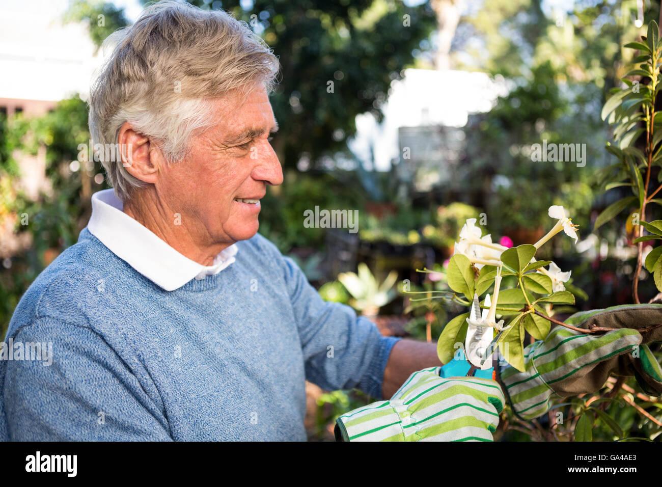 Happy gardener pruning twigs of plants at garden - Stock Image