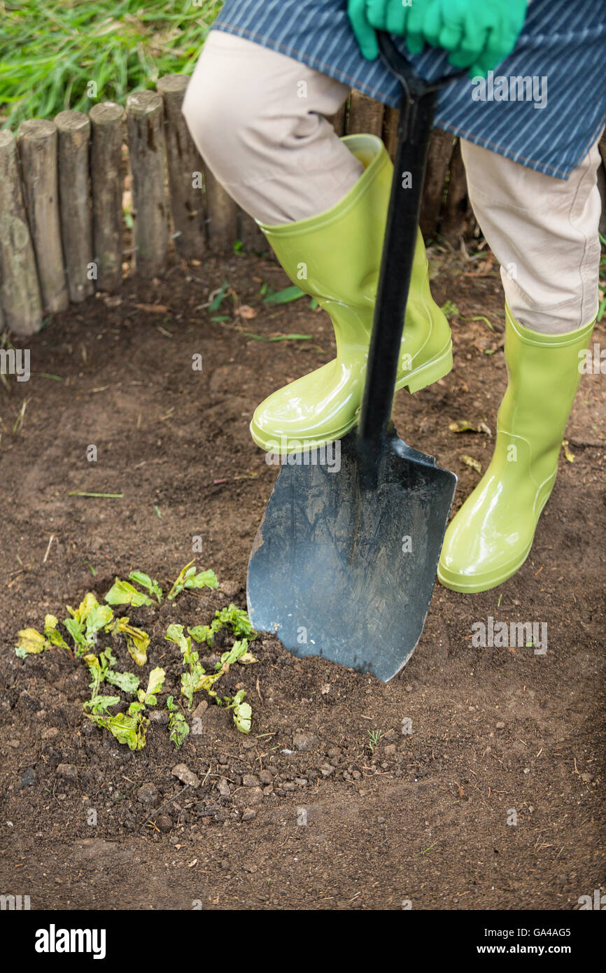 Low section of gardener with shovel at garden - Stock Image