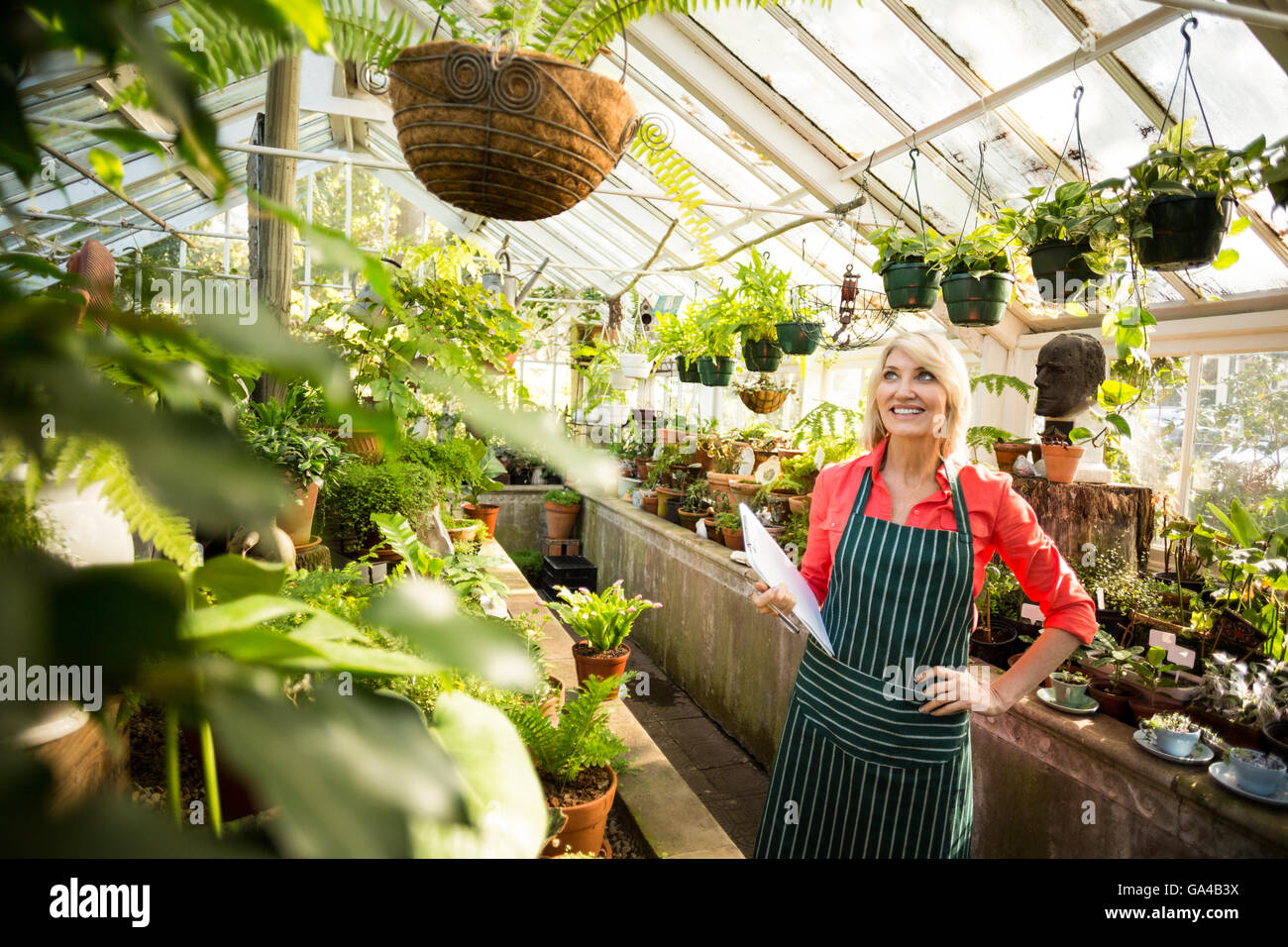 Woman looking at plants hanging in greenhouse - Stock Image