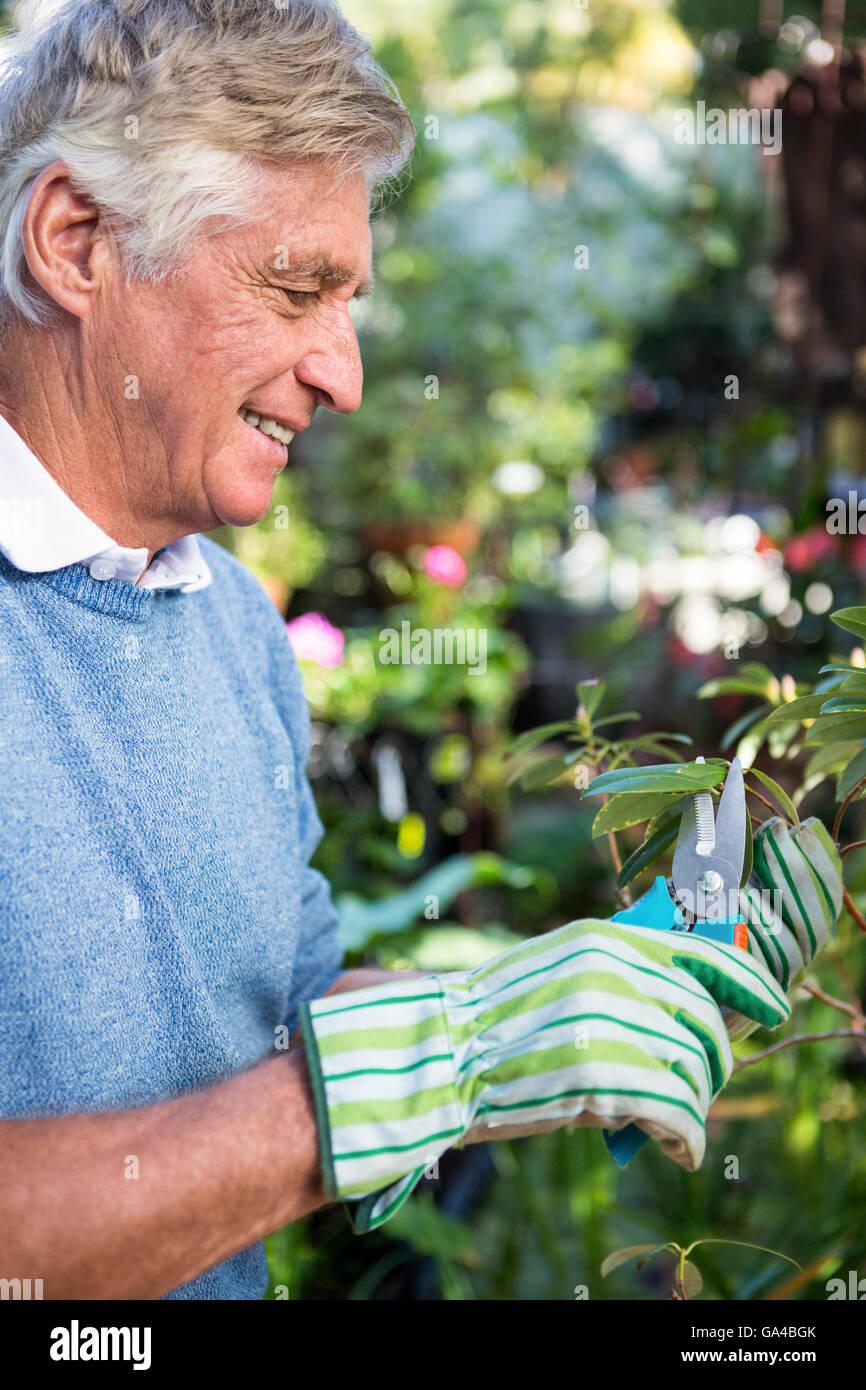 Side view of happy gardener pruning twigs at garden - Stock Image