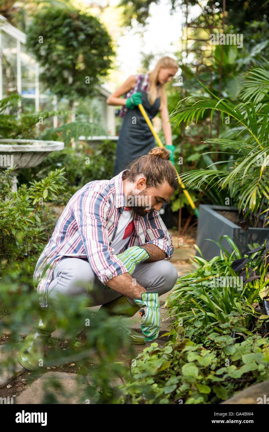 Male gardener planting at community garden - Stock Image
