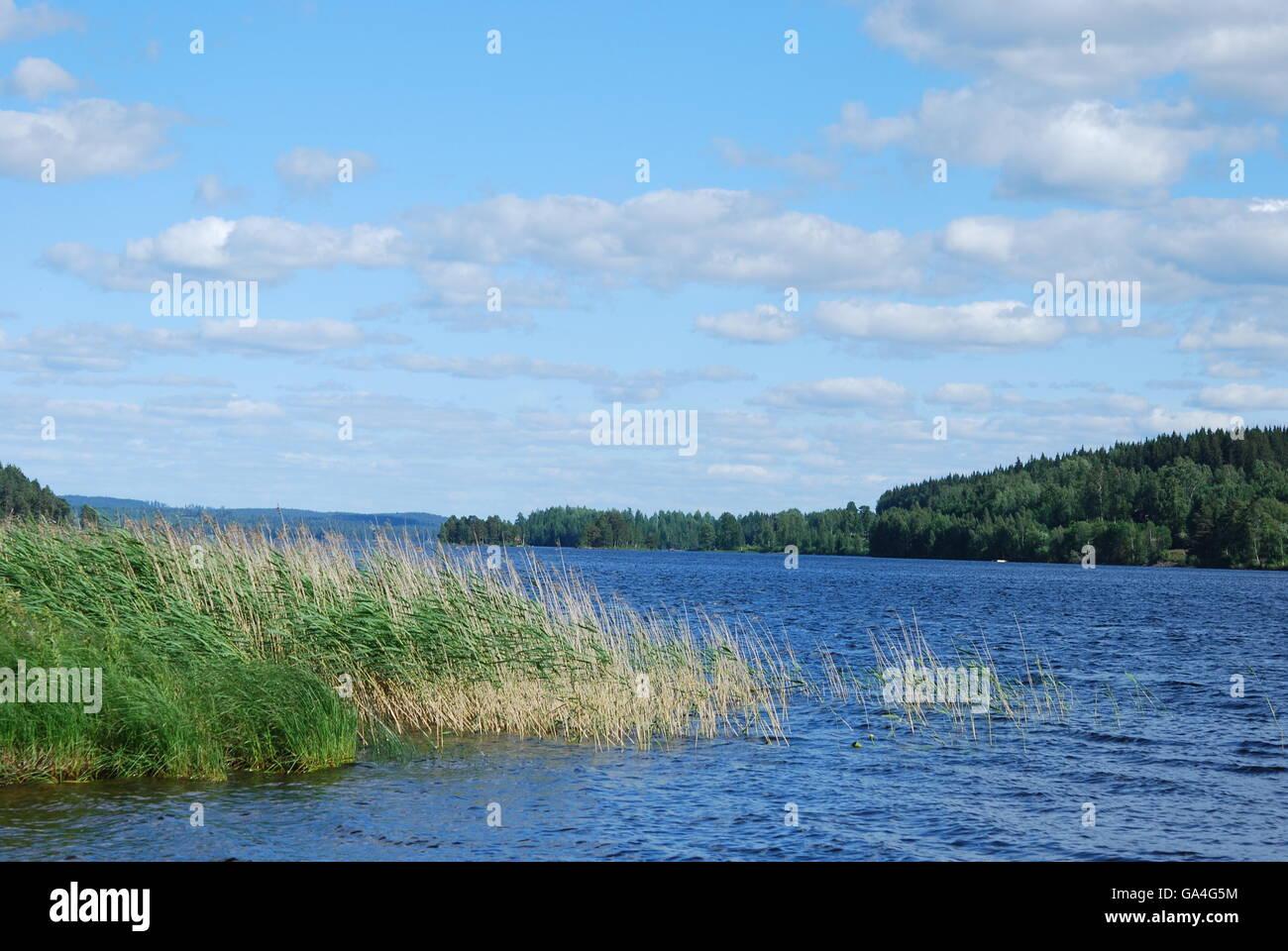 Swedish lake in summer - Stock Image
