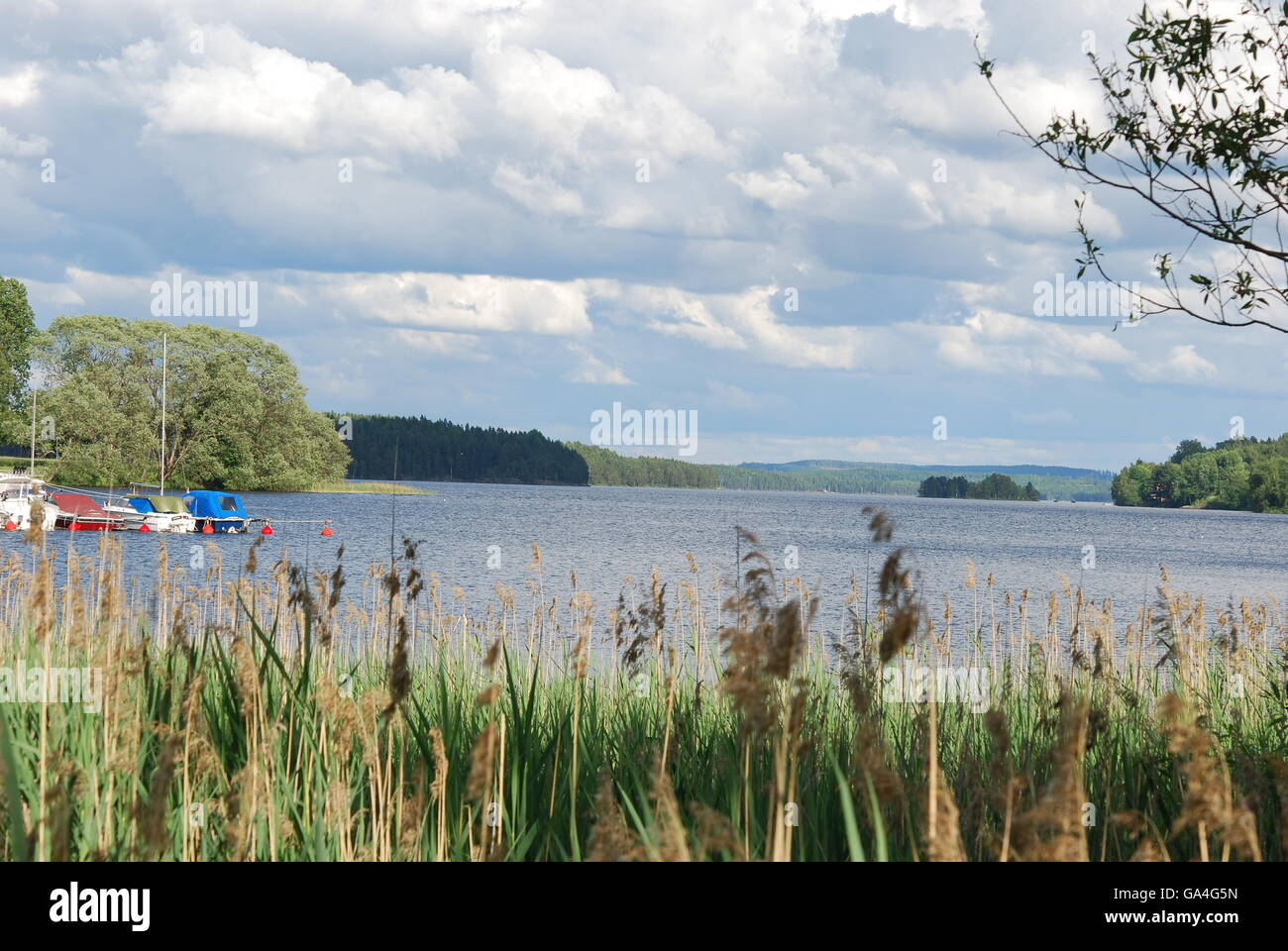 Swedish lake surrounded by trees - Stock Image