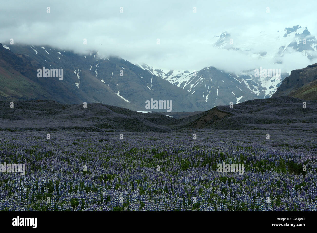 Glacial valley Iceland - Stock Image