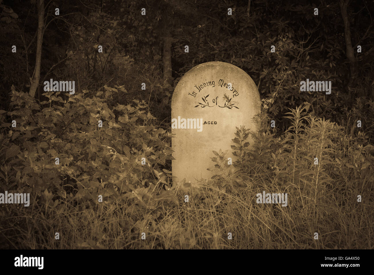 Single Concrete headstone contrasts in bush in old style sepia tones - Stock Image