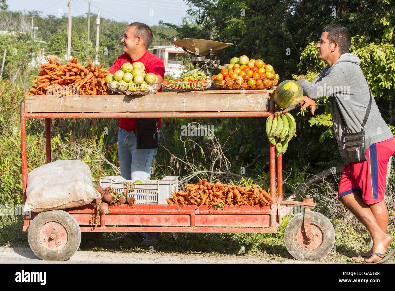 Part of the evolving economy in Cuba, two men with produce cart sell fruits and vegetables beside the road in Playa - Stock Image