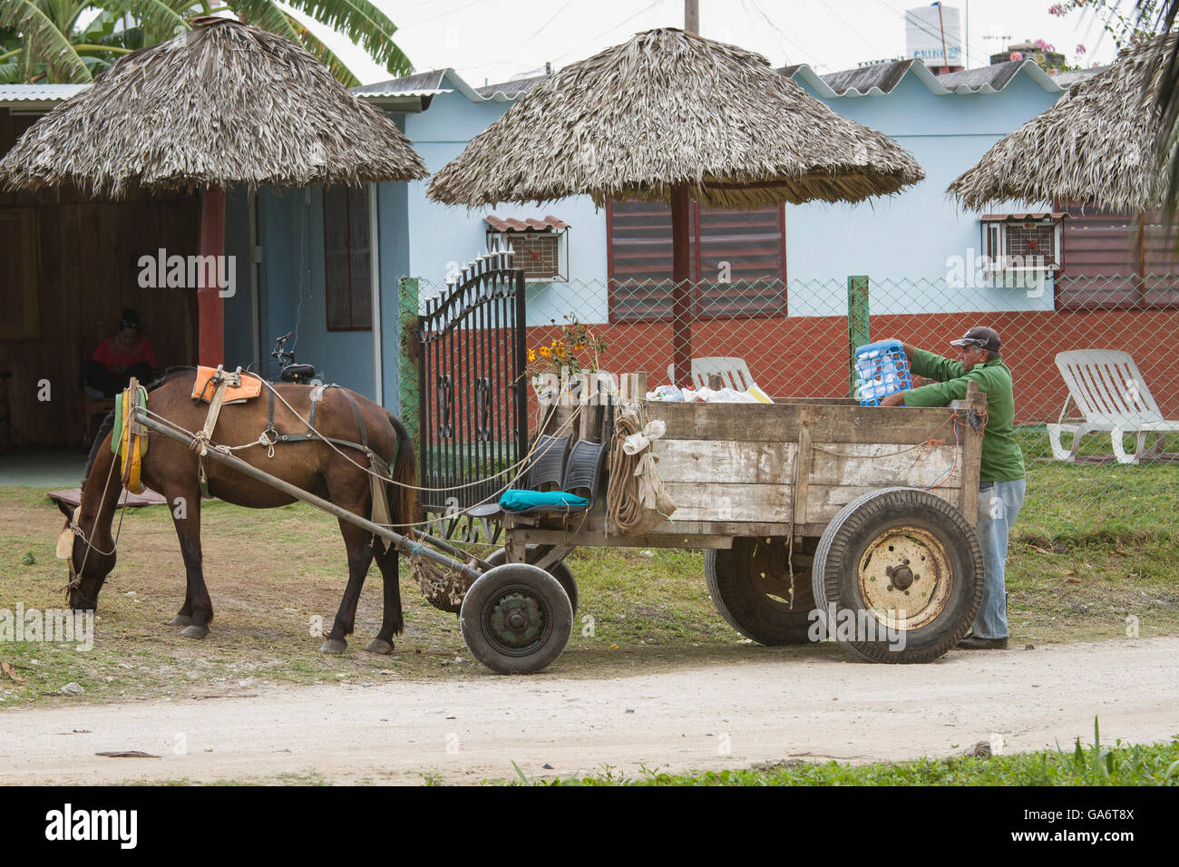 Man with horse-drawn wagon collecting trash from residences in Playa Larga, Cuba - Stock Image