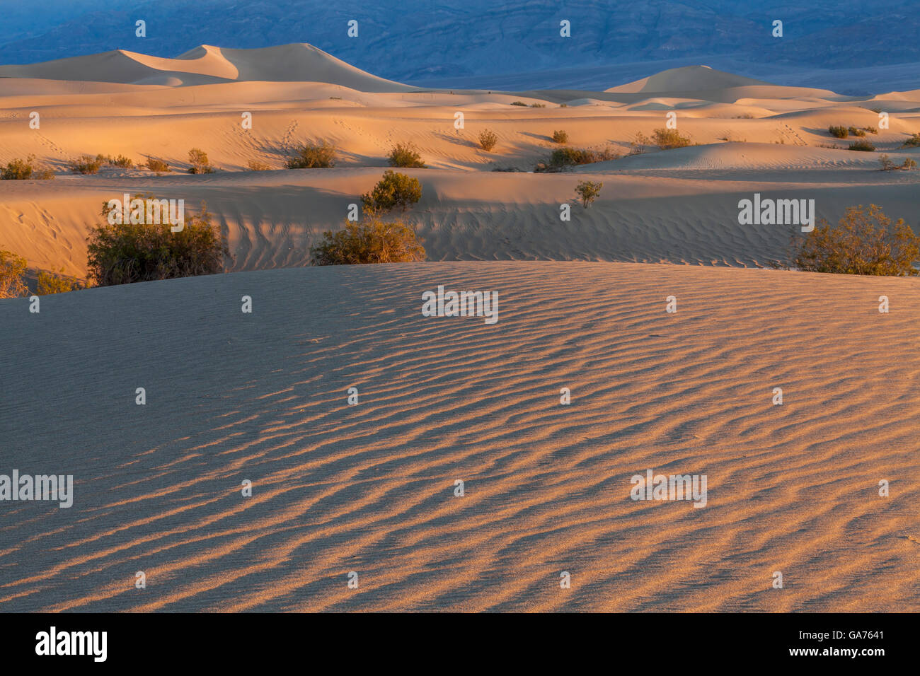 Mesquite Sand Dunes in Death Valley National Park, California, USA - Stock Image