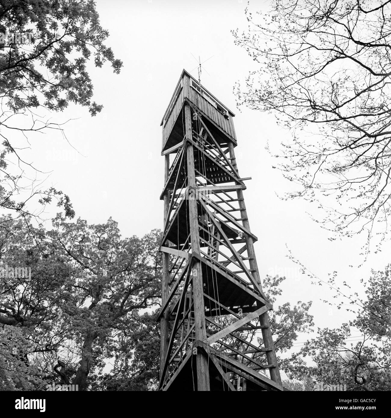 Environment - New Forest Tower - Stock Image