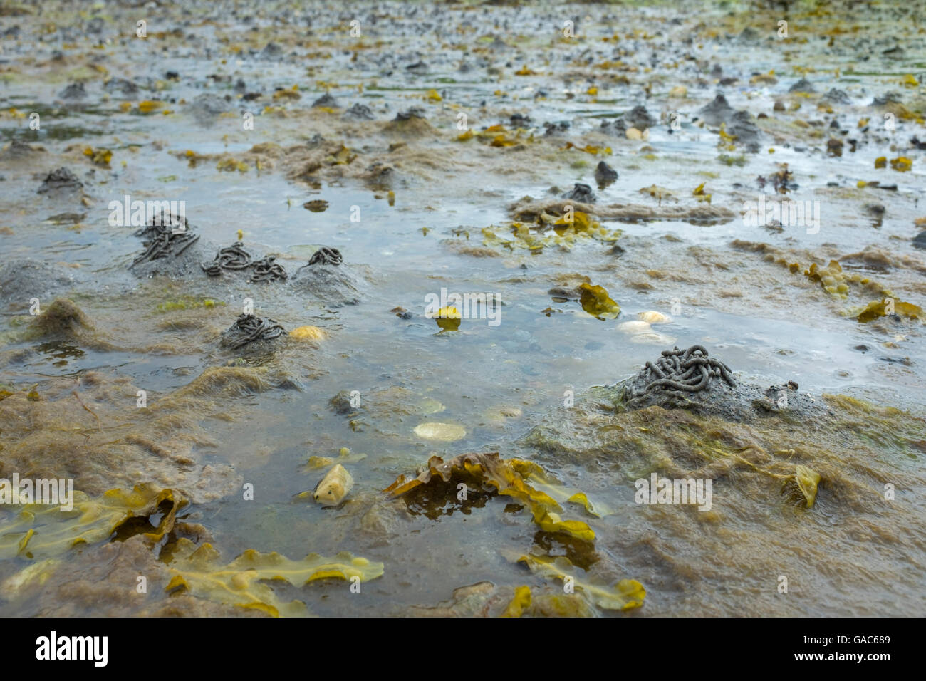 Lugworm casts on the shores of Loch Linnhe, Scotland. - Stock Image