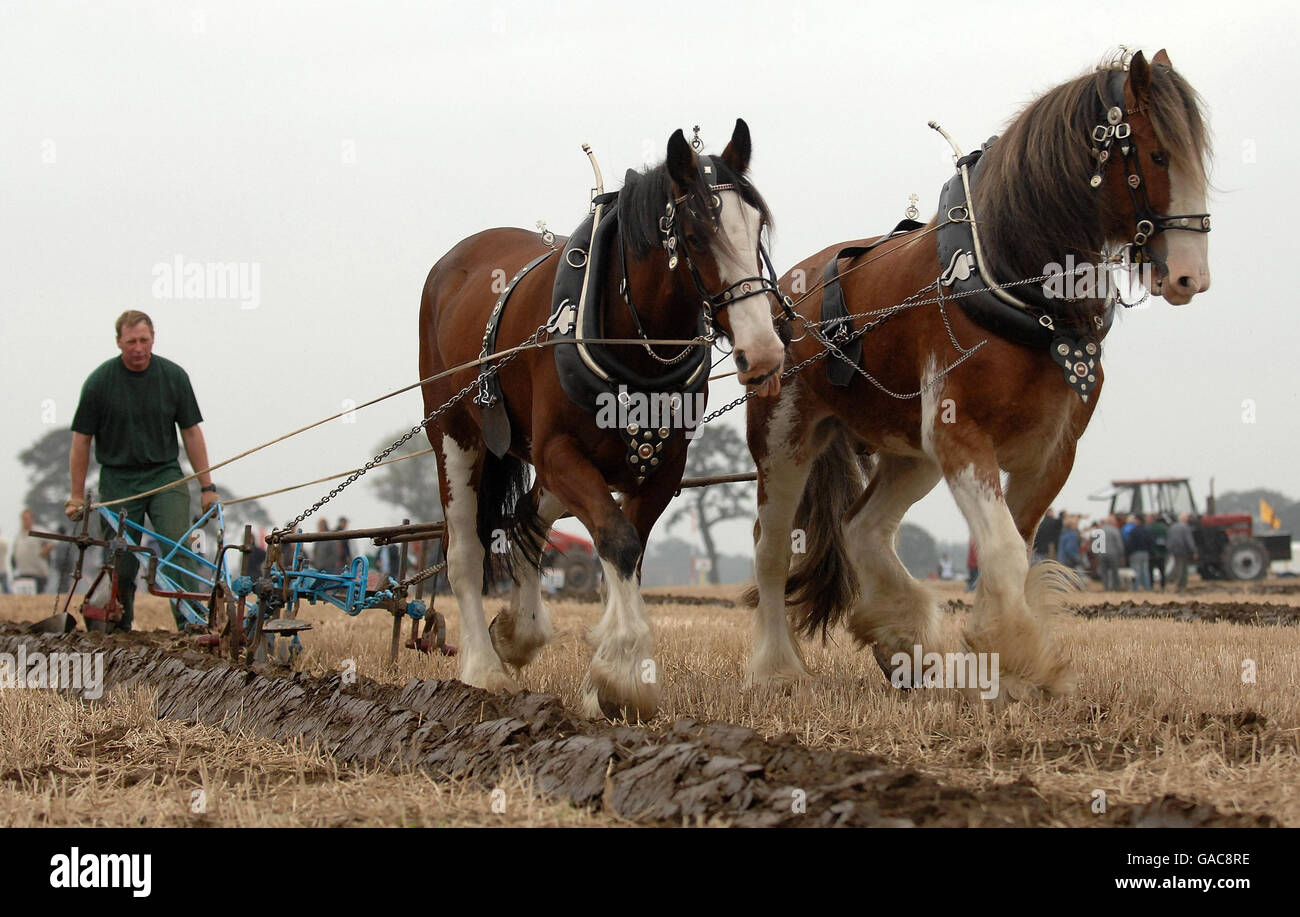 National Ploughing Championships - Stock Image