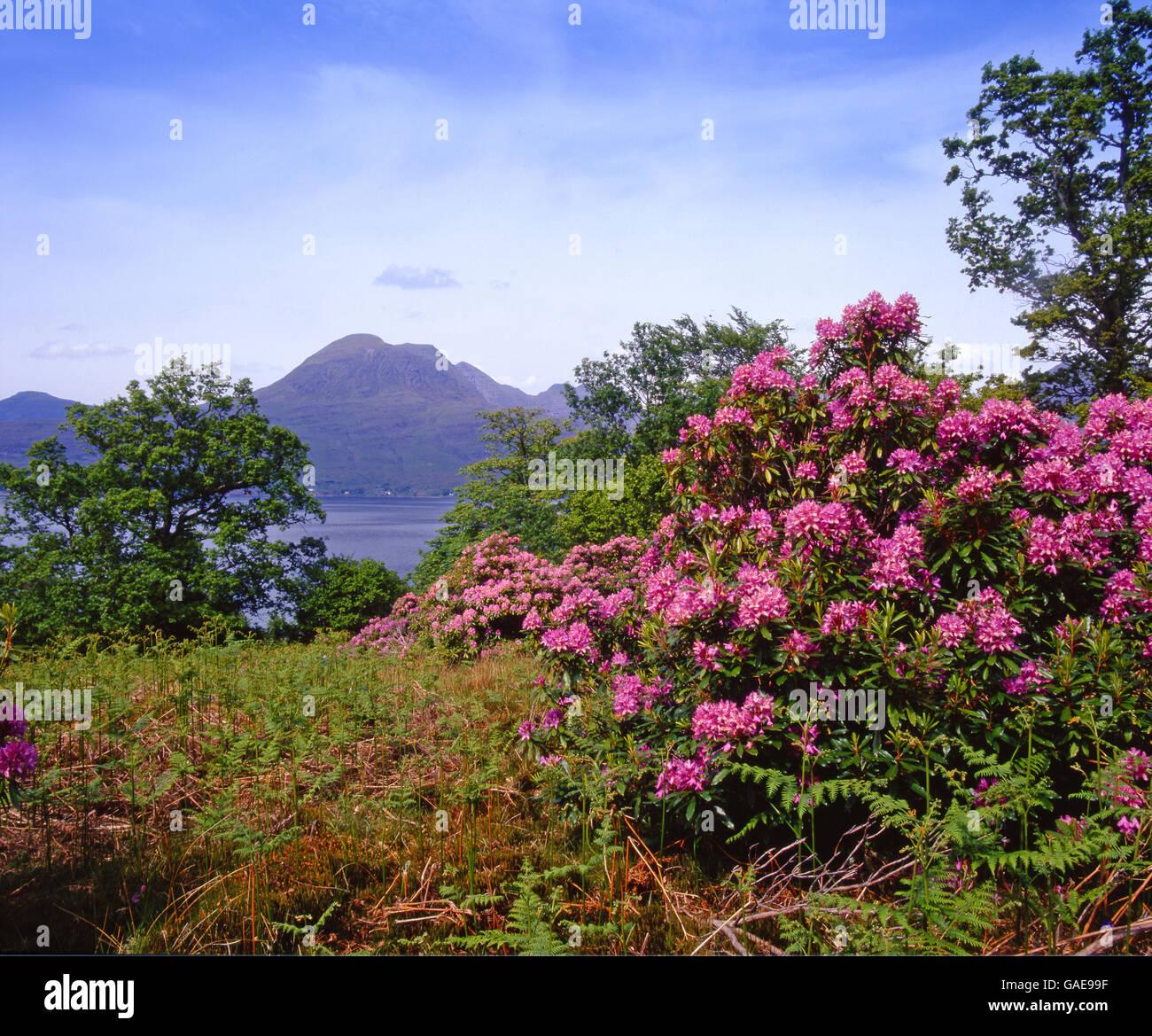 Springtime view of Beinn Alligin, Torridon, N/W Highlands - Stock Image