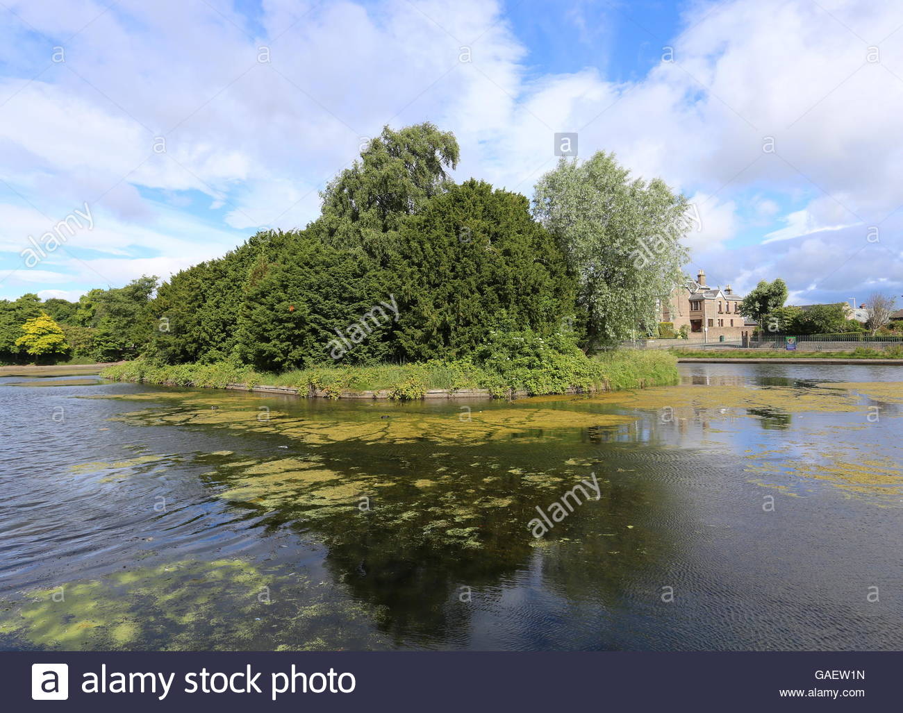 Stobsmuir Pond Dundee Scotland  July 2016 - Stock Image