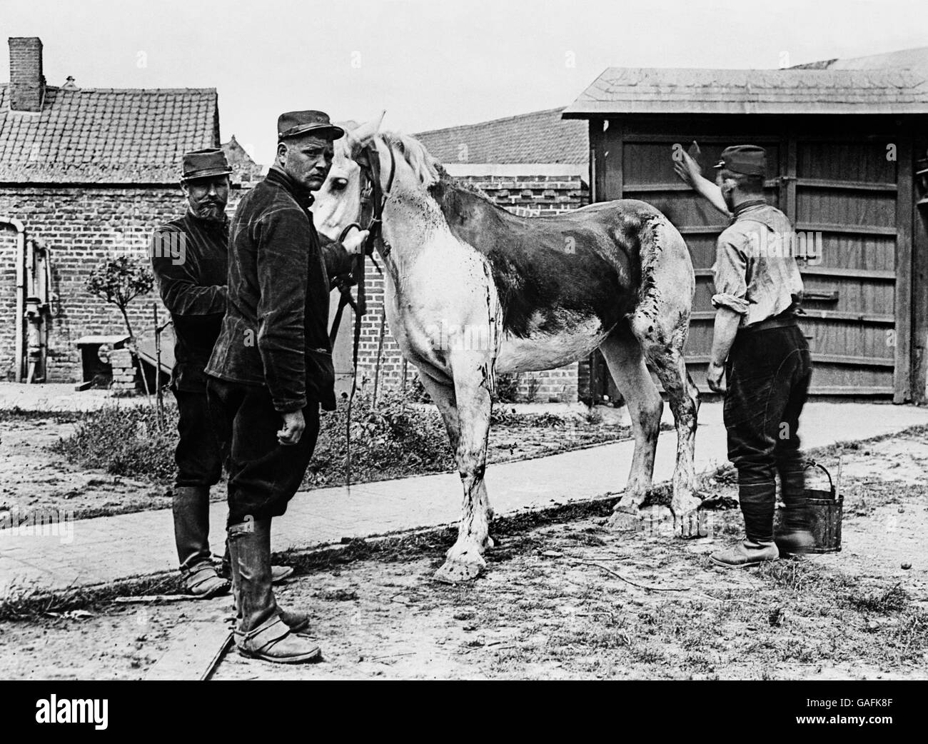 War - World War One - Horses - Stock Image