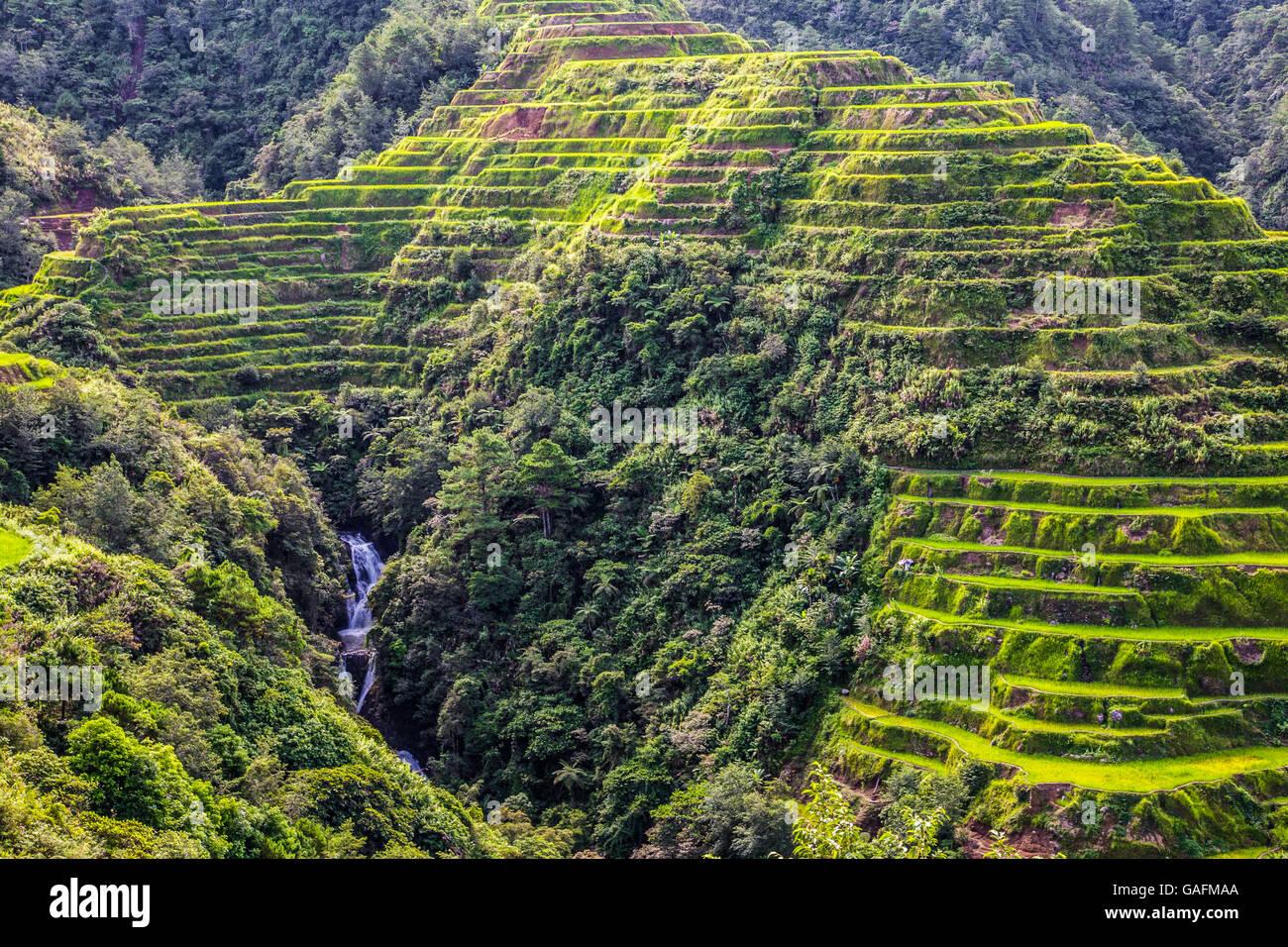 Banaue Rice Terraces represent an enduring illustration of an ancient civilization that has survived despite modernization - Stock Image