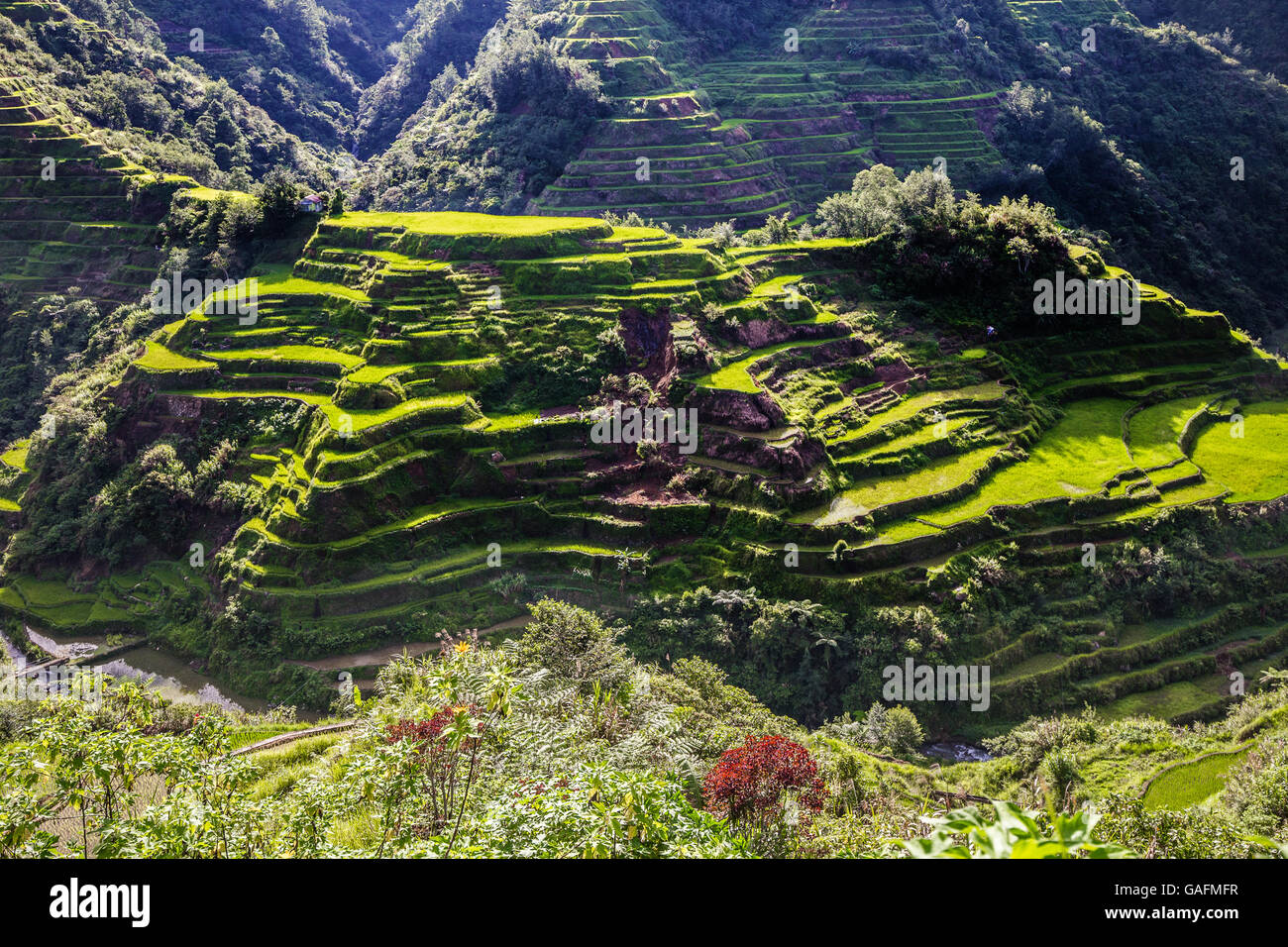 Banaue Rice Terraces represent an enduring illustration of an ancient civilization that has survived despite modernization - Stock Image
