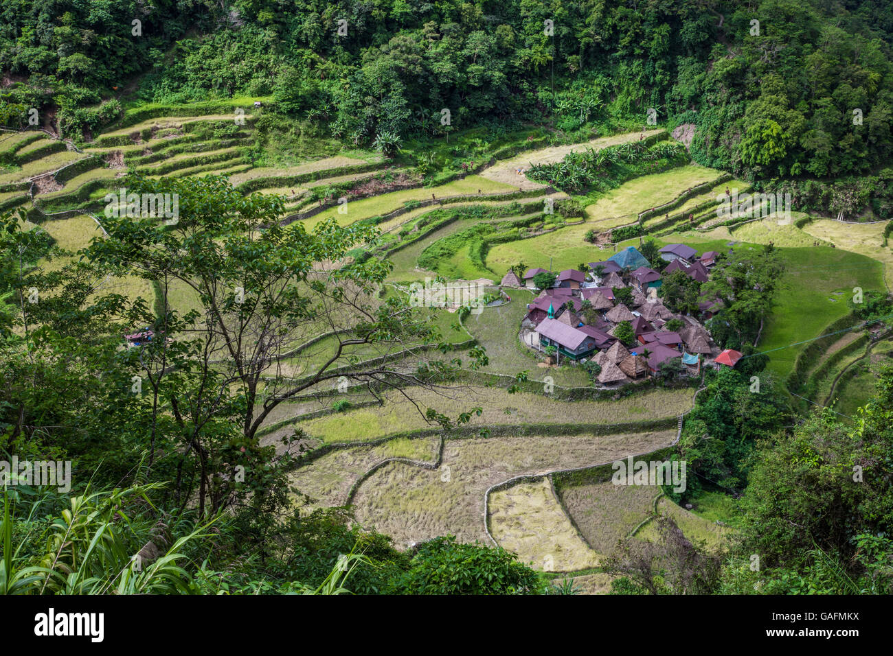 Bangaan rice terraces in Banaue. The rice terraces of the Ifugao have been built to follow the contours of the mountains. - Stock Image