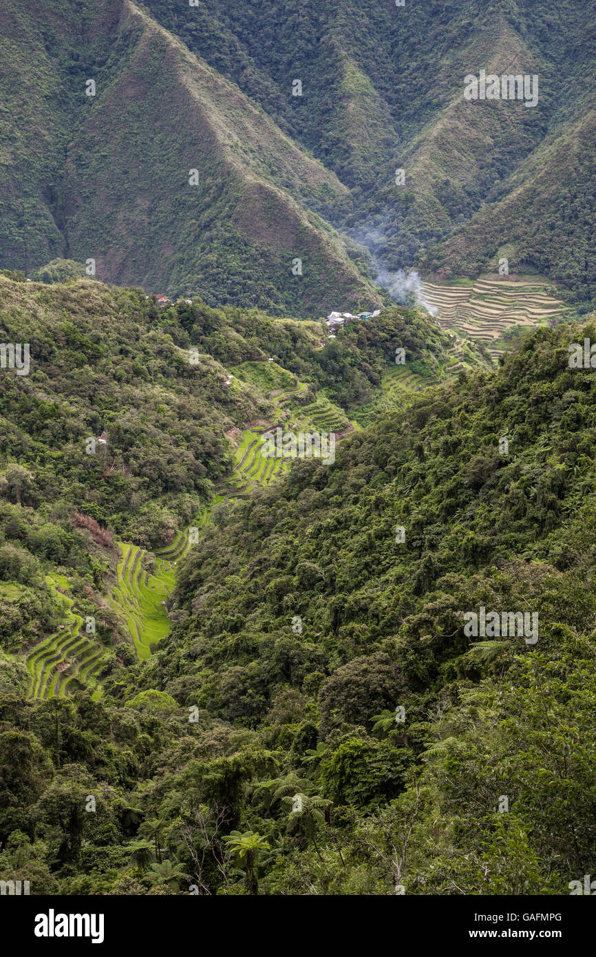 Batad rice terraces have an amphitheatre semi-circular quality with a village at its base. The rice terraces of - Stock Image