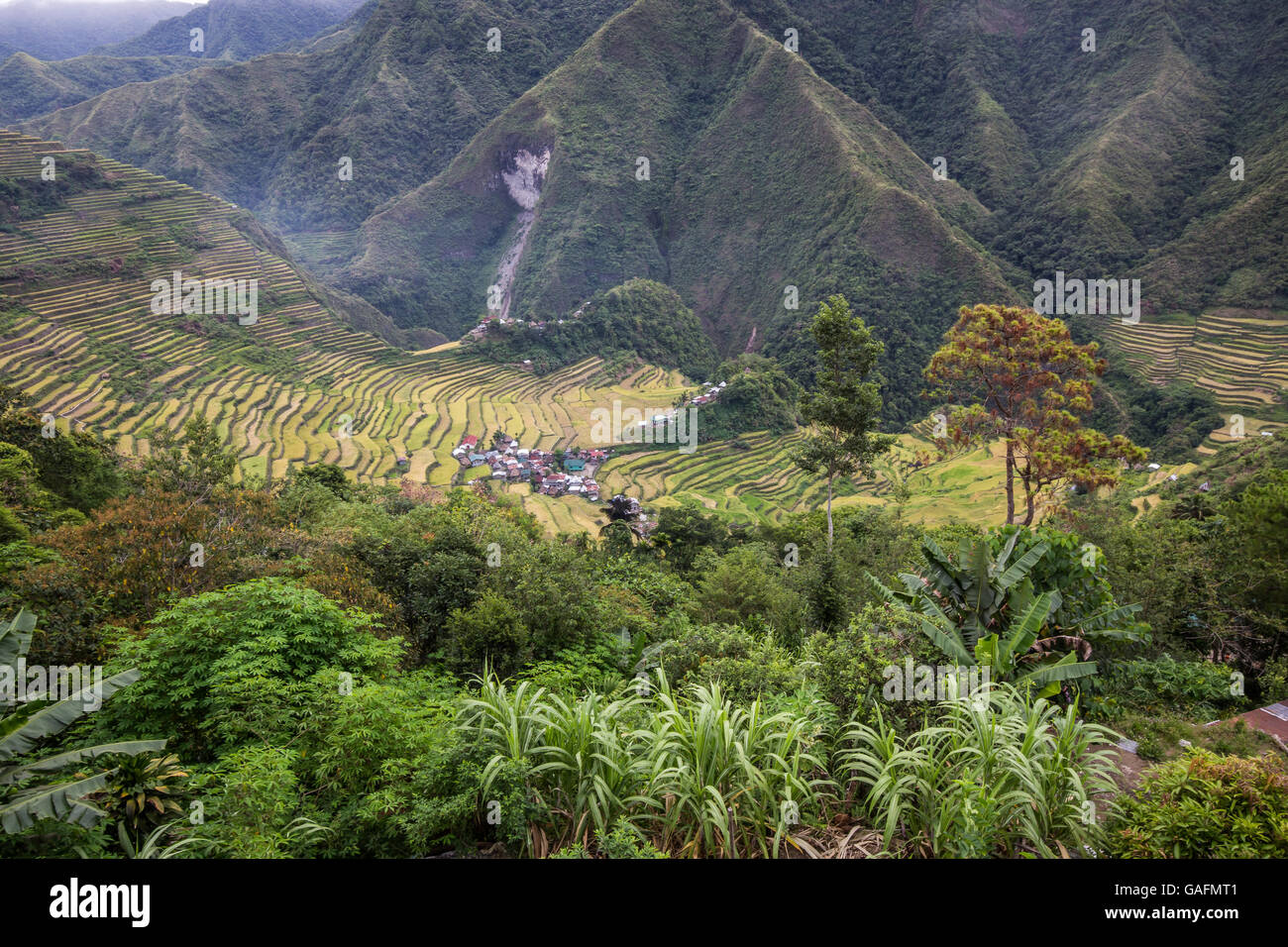 Batad rice terraces have an amphitheatre semi-circular quality with a village at its base. - Stock Image