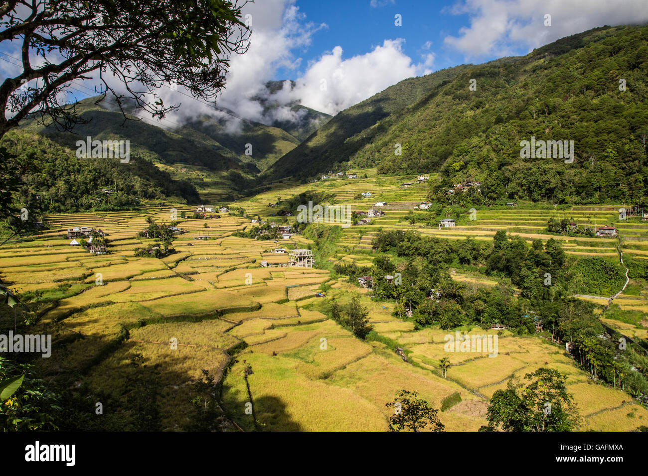 Hungduan Hapao rice terraces near Banaue is expansive with scattered village huts between the paddies. - Stock Image