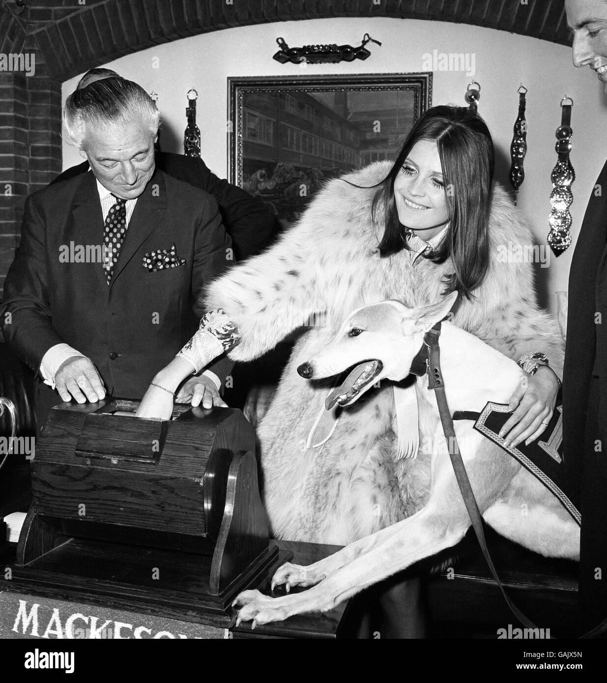 Greyhound Racing - Mackeson Greyhound Championship - Whitbread's City Cellars - Stock Image