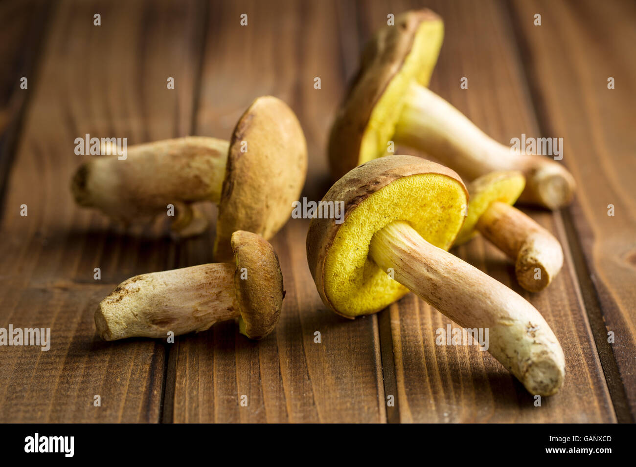Autumn harvest of fresh woodland fungi with boletus mushrooms on old wooden table. - Stock Image