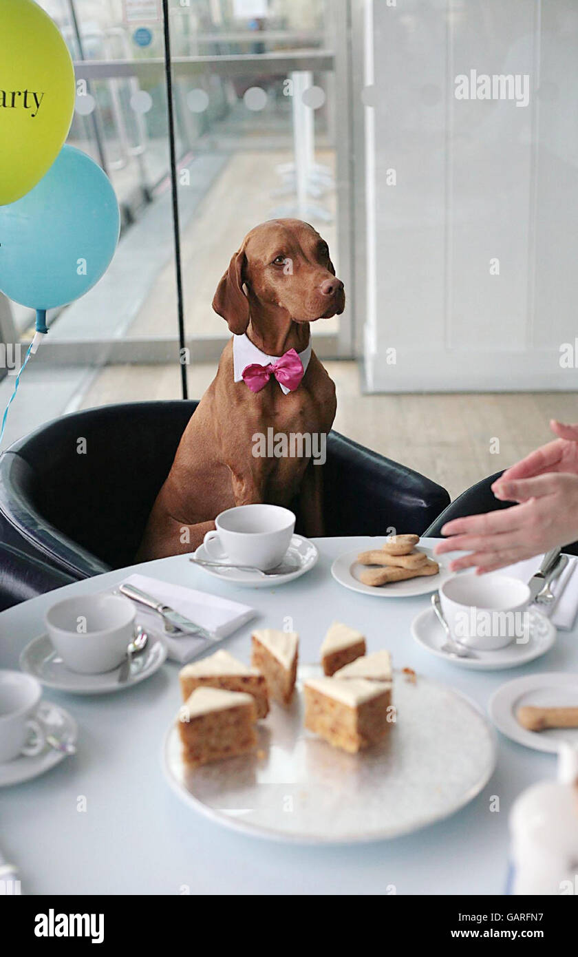 Dogs' tea party in aid of Blue Cross pets charity - Stock Image