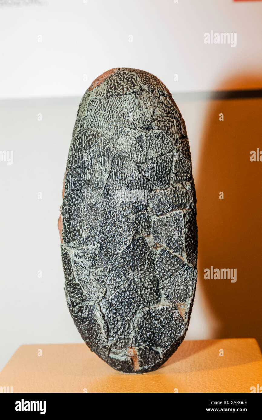 England, London, Forest Hill, Horniman Museum, Display of 70 million year old Dinosaur Egg - Stock Image
