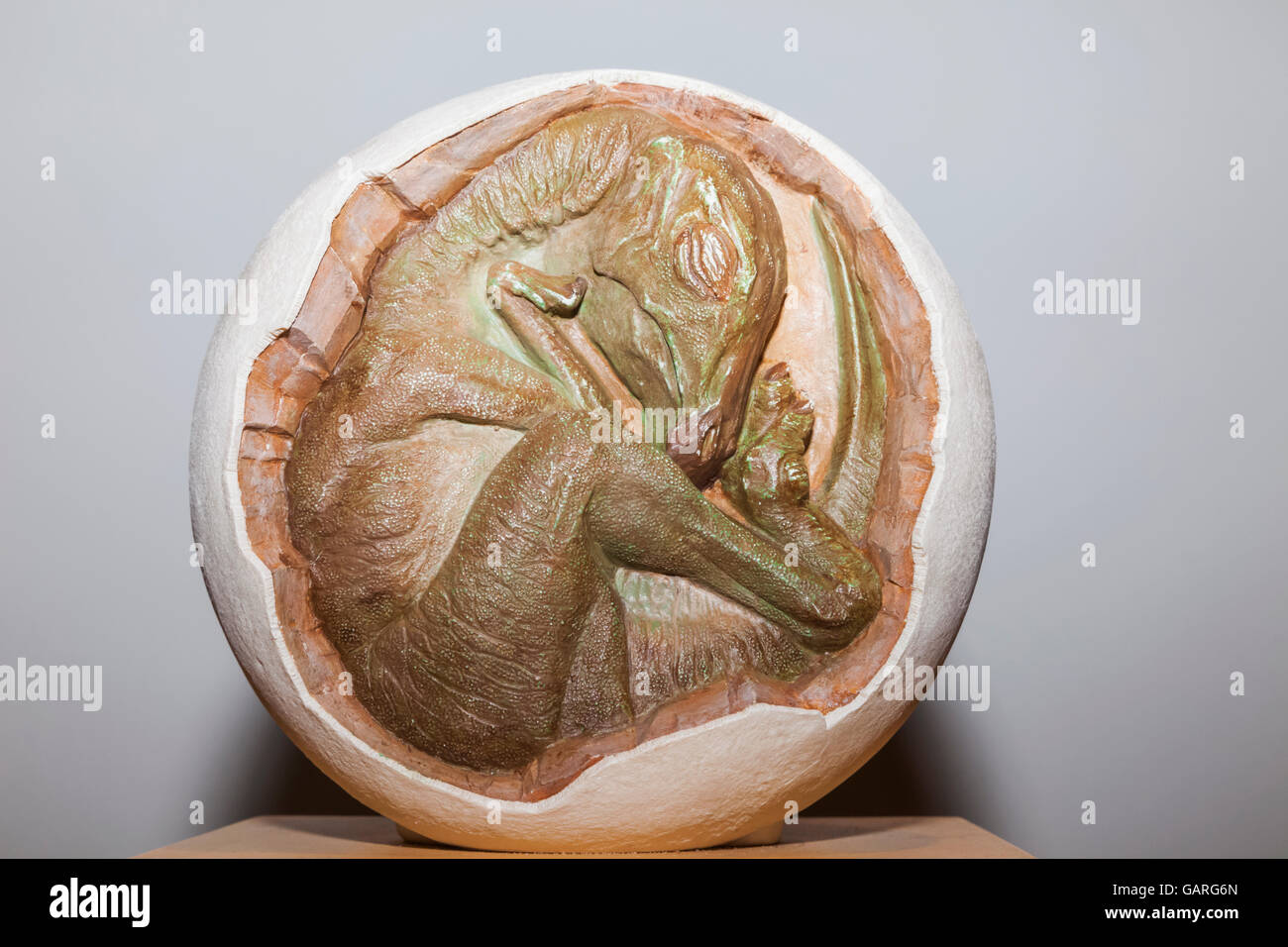 England, London, Forest Hill, Horniman Museum, Display of Hadrosaur Embryo Model - Stock Image