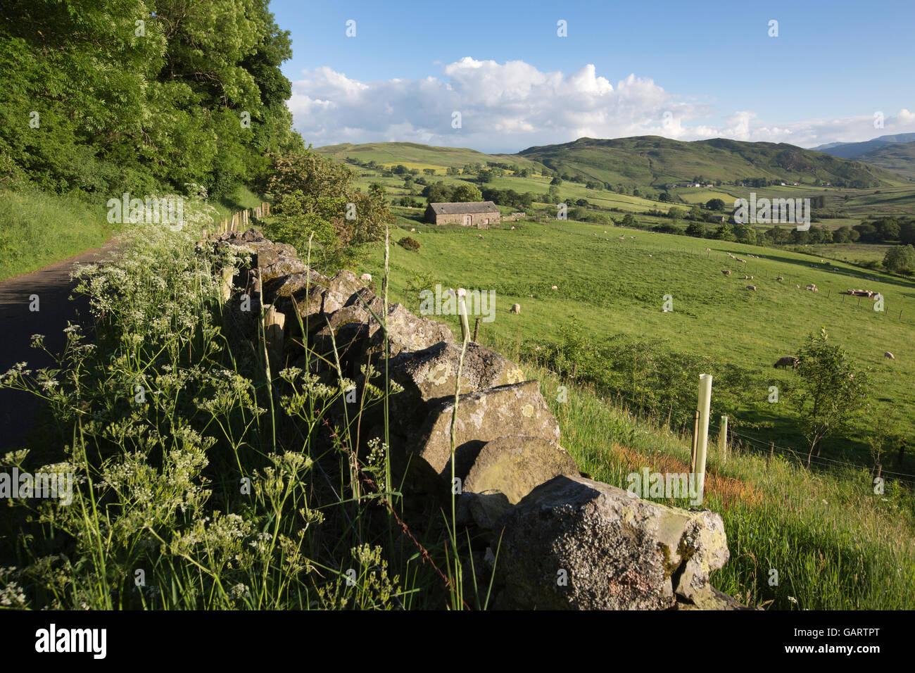 Matterdale, Eden Valley, Lake District, Cumbria, England, UK - Stock Image