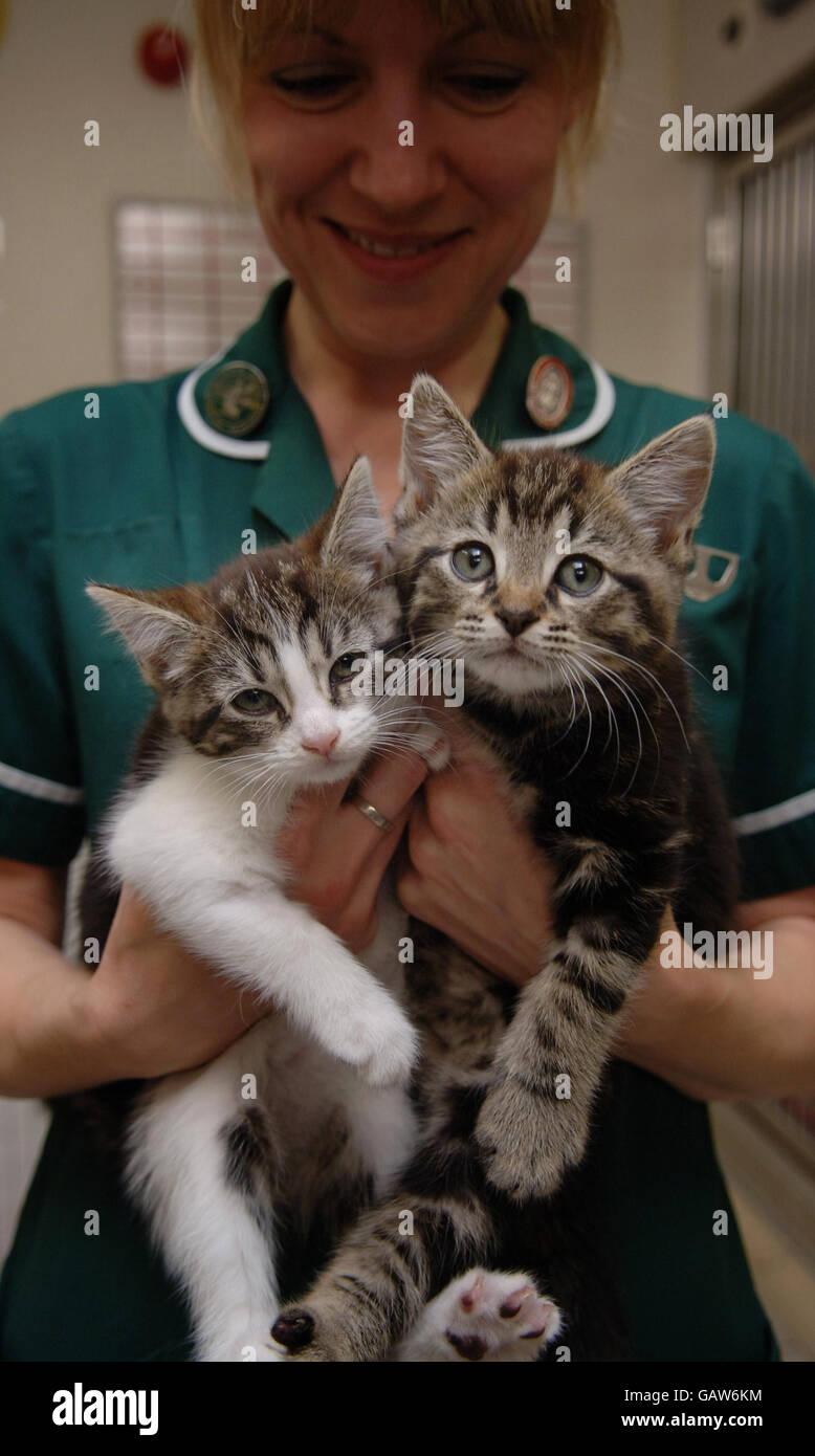 Dumped kittens - Stock Image