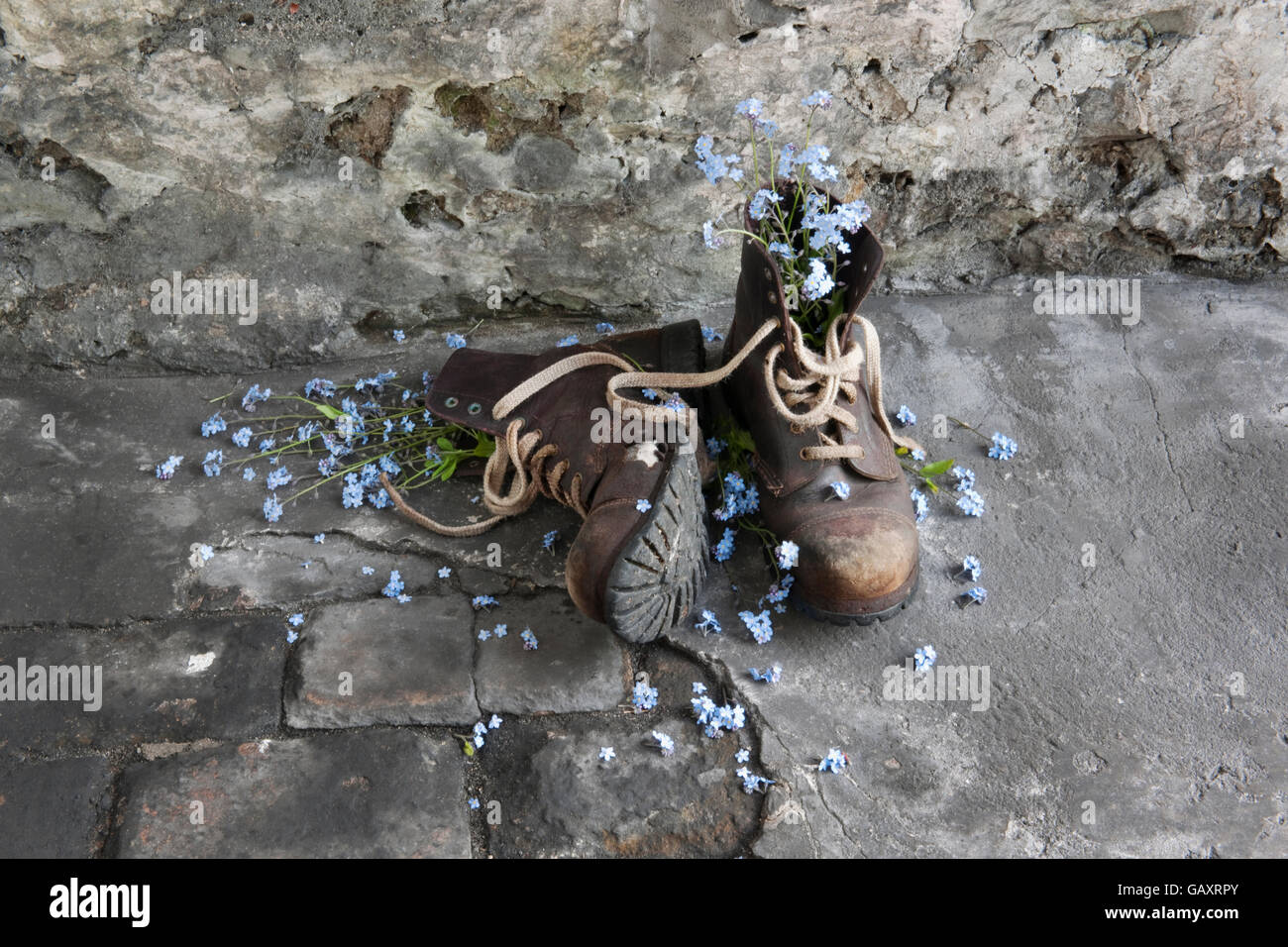 A pair of old leather work boots on workshop floor with forget-me-not flowers. - Stock Image