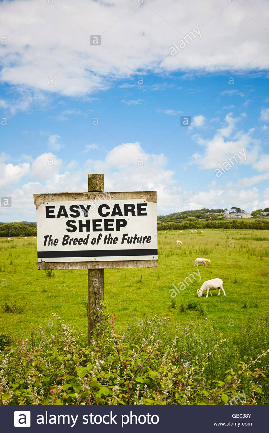 Sheep breeding sign in a field 'Easy Care Sheep' - Stock Image
