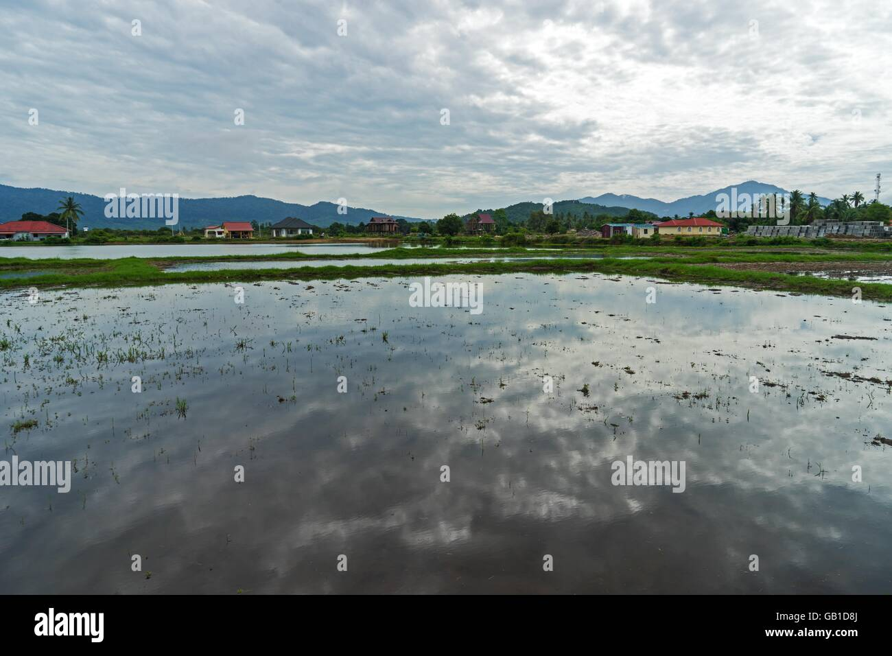 Flooded paddy fields in Langkawi, Malaysia Holiday background - Stock Image