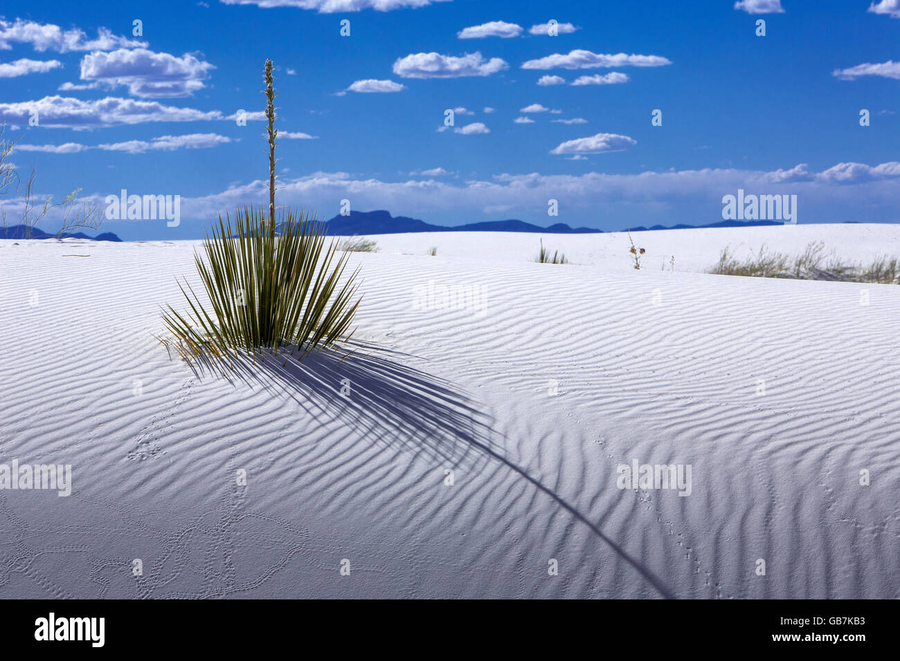 White Sands National Monument New Mexico - Stock Image