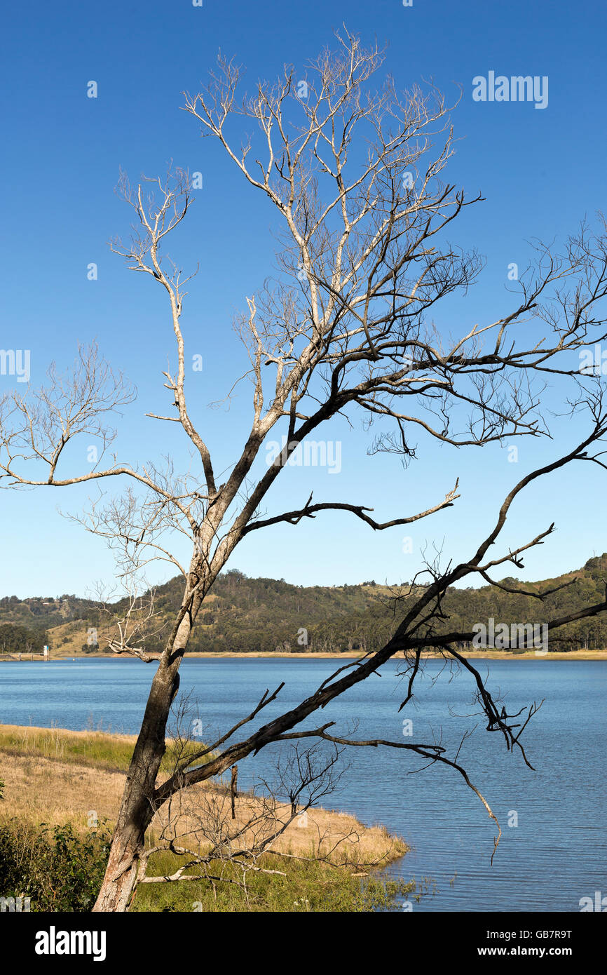 View of a dead tree by Lake Baroon Dam in the Sunshine Coast interland, Queensland, Australia - Stock Image