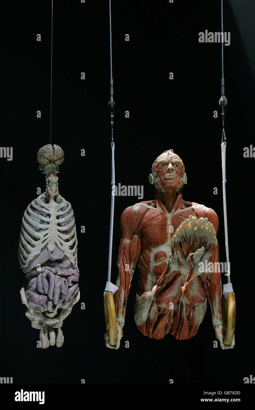 Body Worlds The Mirror Of Time Exhibition Stock Photo Alamy