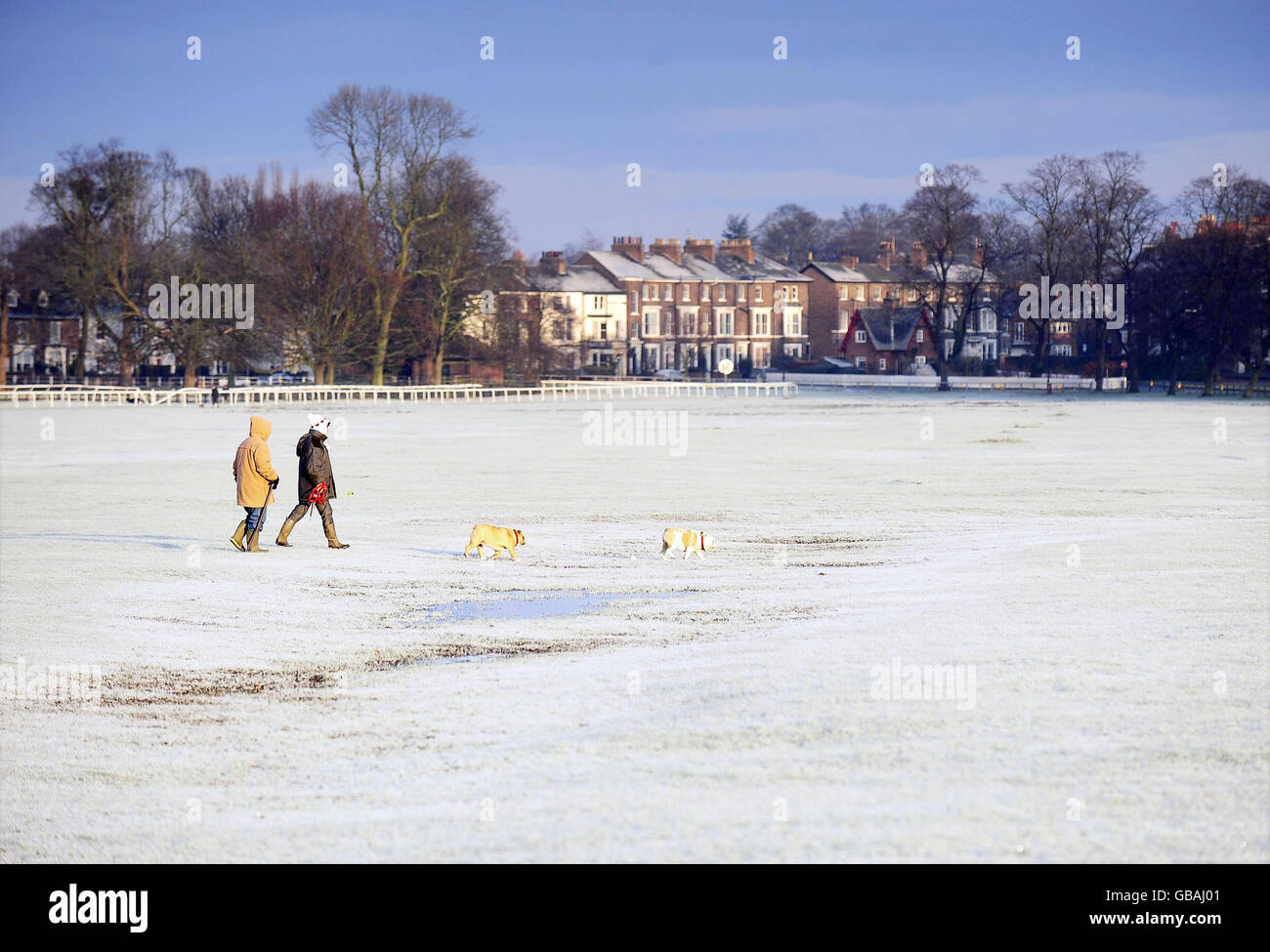 Frost in the UK - Stock Image