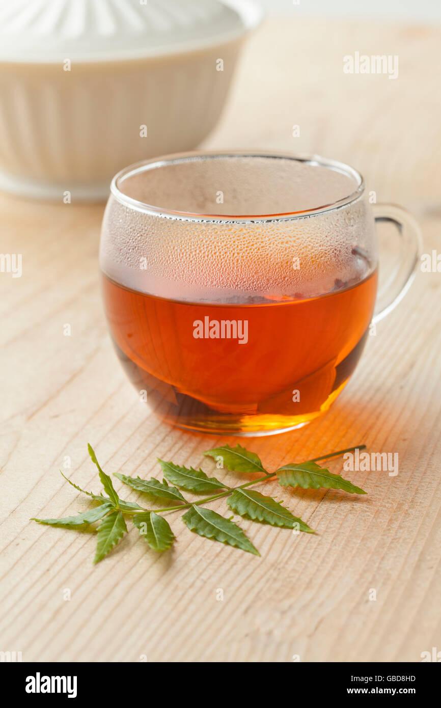 Glass with Neem tea and Neem twig - Stock Image
