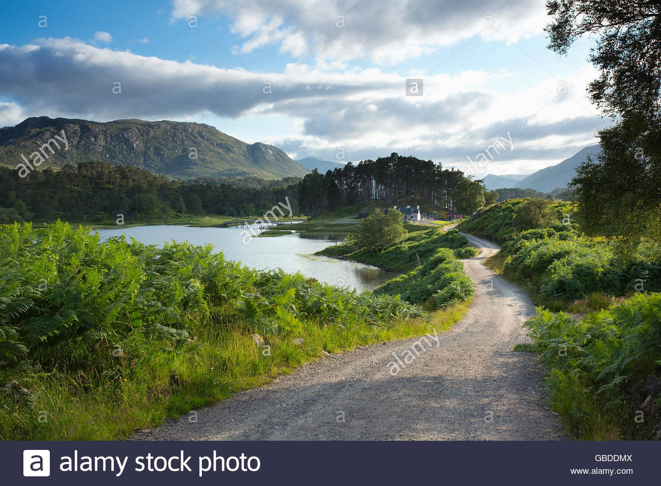 A gravel track leading to a cottage by the side of Loch Affric in Glen Affric, Highlands of Scotland. - Stock Image