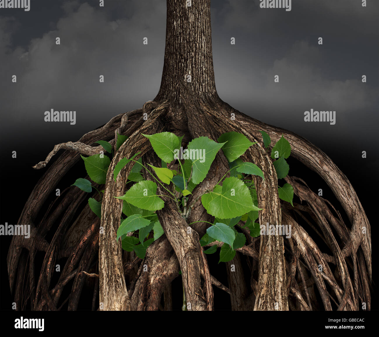 Difficult business growth concept as a large tree root obstacle trapping a determined smaller green sapling representing - Stock Image