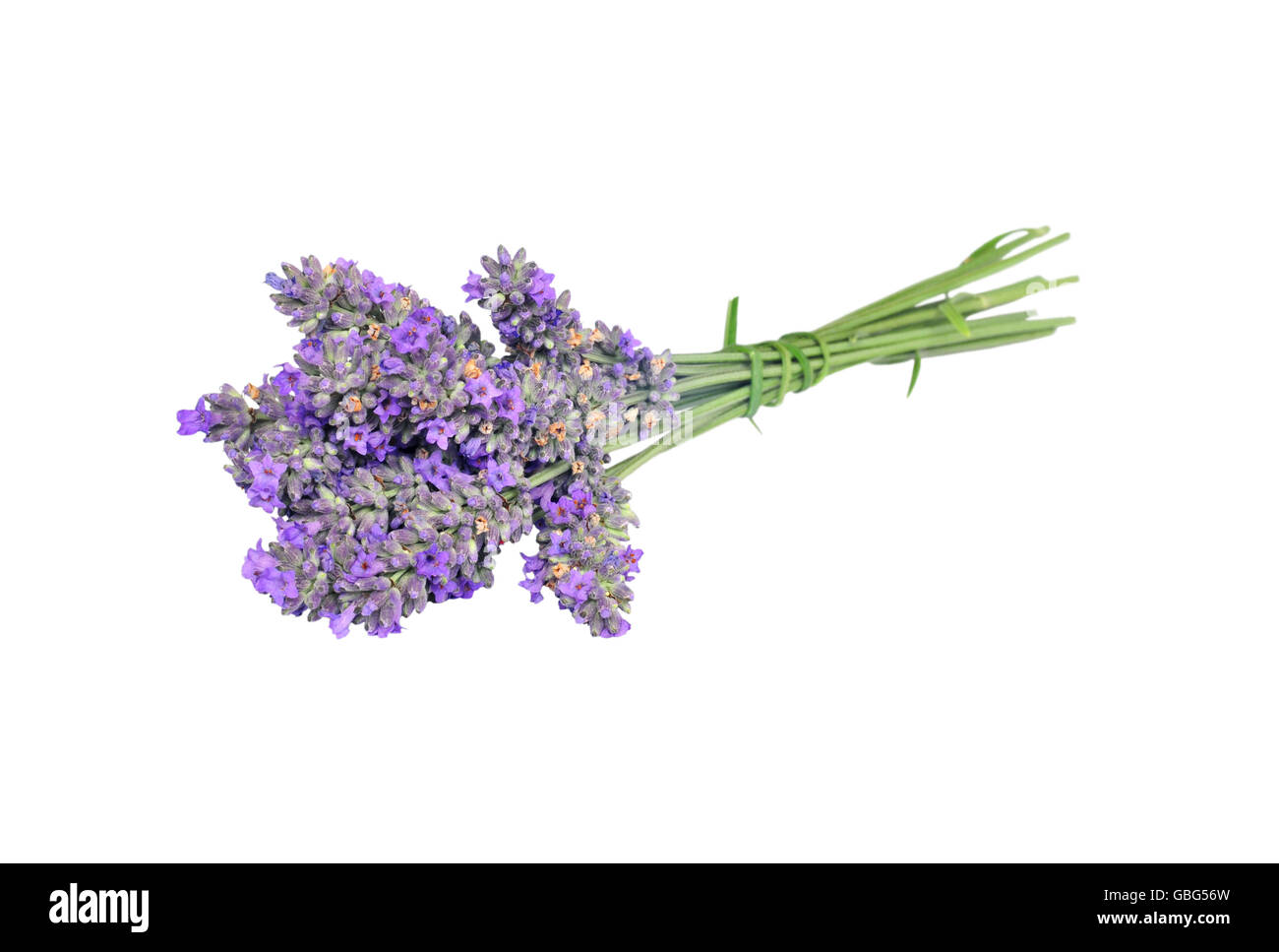 Bouquet of lavender isolated on white background - Stock Image