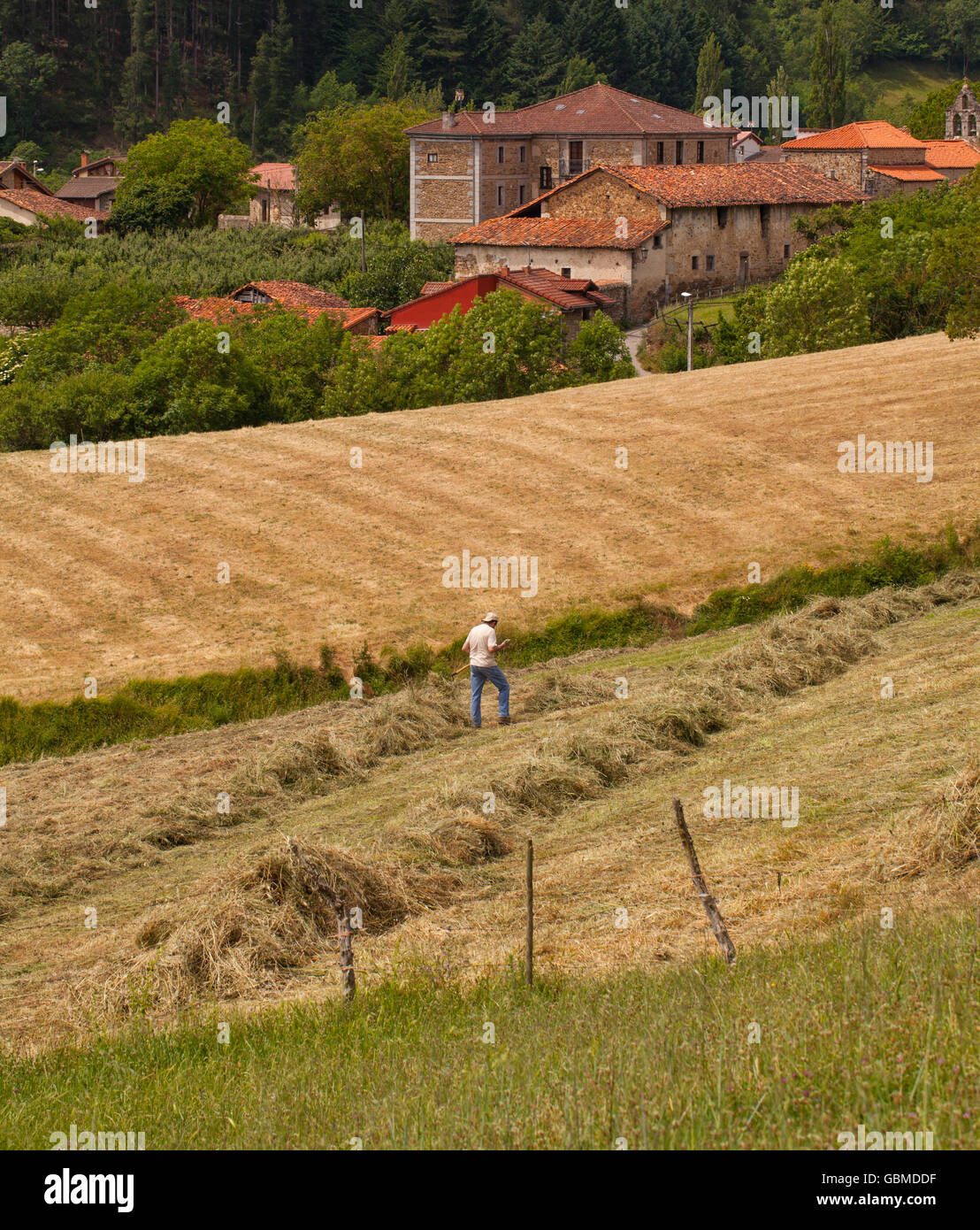 Hay making by traditional farming methods at a farm in Turieno in the Picos de Europa Northern Spain - Stock Image