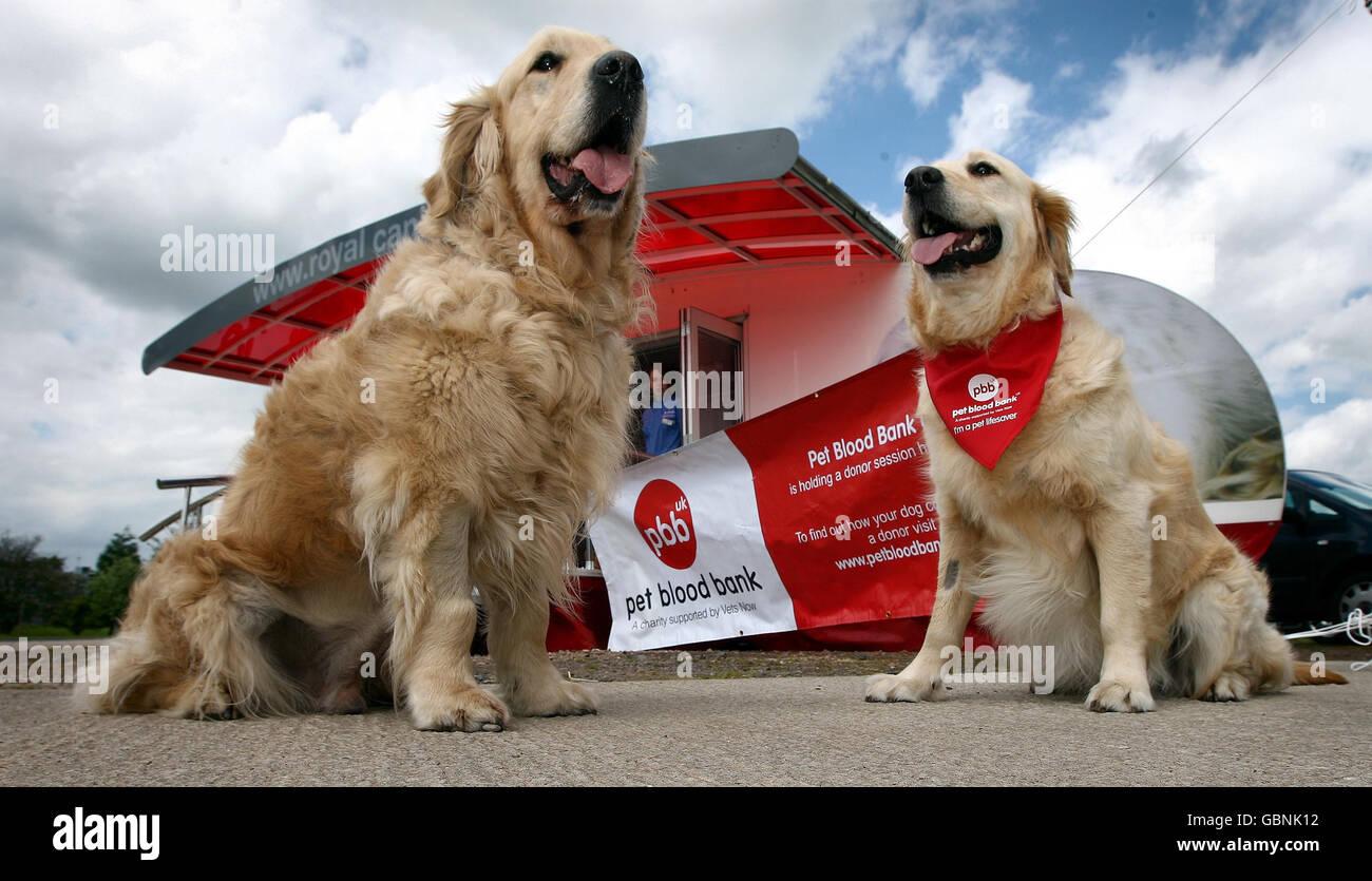 Pet Blood Bank UK - Stock Image