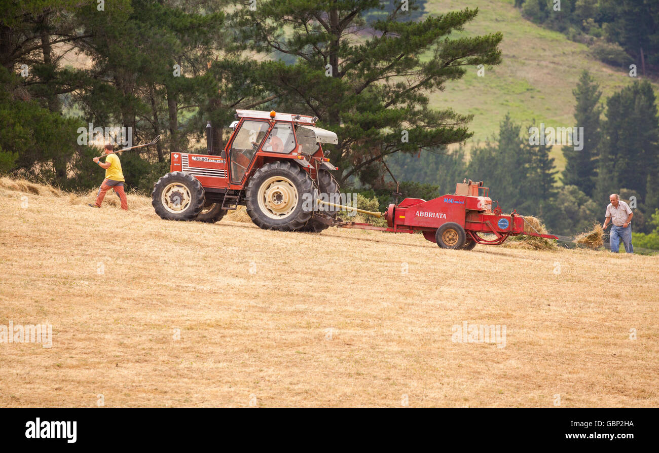 Spanish farmers with a red tractor collecting and bailing hay in the Picos de Europa national park Northern Spain Stock Photo