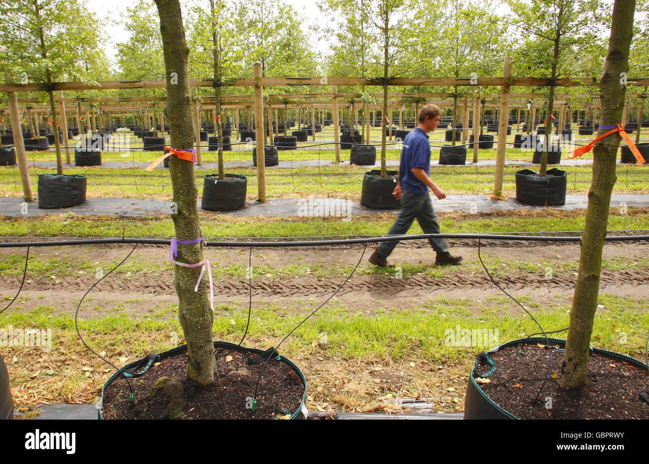 Olympic Park trees Stock Photo